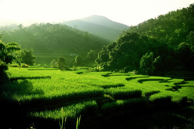 ทุ่งหญ้าสวยงาม