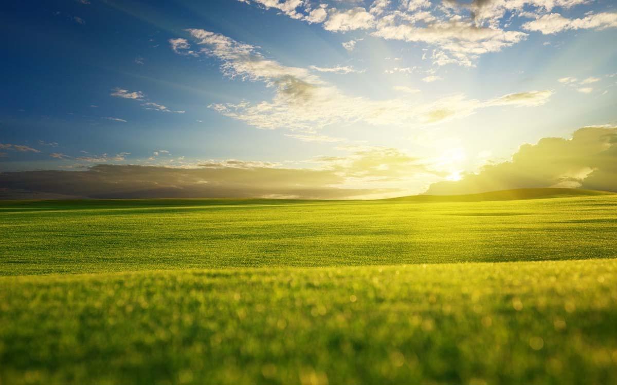 ทุ่งหญ้า